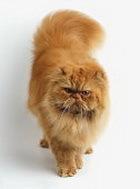 Кошки = независимость + избирательность в любви