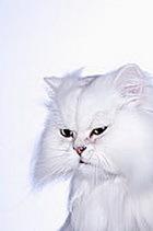 Как кошка Мурка свила себе гнездо