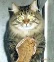 Кто сказал «мяу»? Немножко о кошках