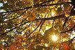 За что я люблю осень?