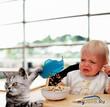 Кормить или не кормить, или Что едят наши кошки?
