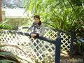 Австралия, Сидней, Royal Botanic Garden, Fern Garden (сад папоротников)