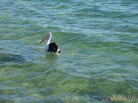 Австралия - птички вокруг