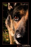 Распространенные мифы о кормлении собак