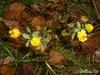 октябрьские цветы, как маленькие солнышки