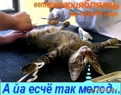 Евгений Гришковец «Из личного (про водку)» Ай вкусно