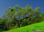 О дереве судят по плодам
