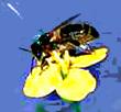 Продукты пчеловодства для всех!