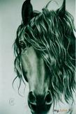 15 мифов о лошадях или Зачем врёт господин Невзоров