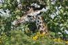 Национальный парк Сенергети