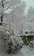 Снег для Наташи