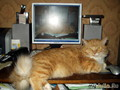 Папочка наших котят - Живоглотик. Длиной был больше метра.