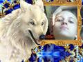 С белым волком