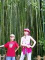 Лес папоротника в ботсаду