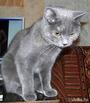 """кошка Нюшка (переименованная из """"Пятнышко"""")"""