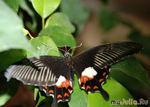 Мой поход в «Дом бабочек»