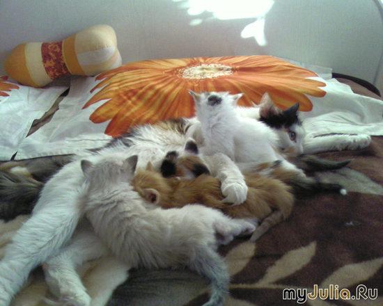 Пуськины котята