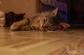 Кошачий коврик