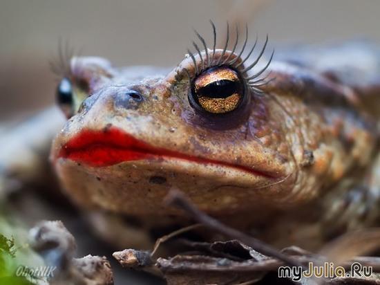 Царевна-жаба