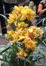 Экзотические выставки. Орхидеи
