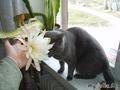 брюс и цветок1