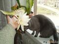 брюс и цветок 2