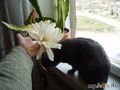 брюс и цветок 3
