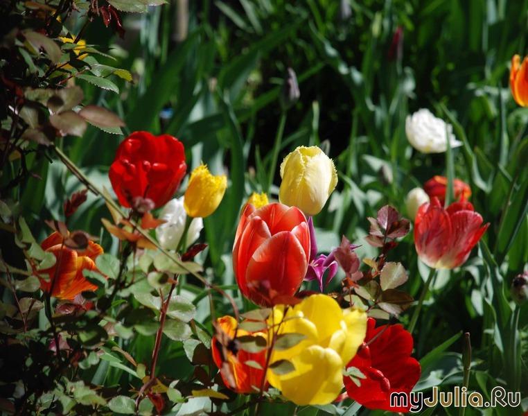 Картинки алматы весной