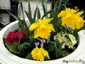 Вазон с цветами