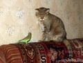 Кошка Машка и попугай