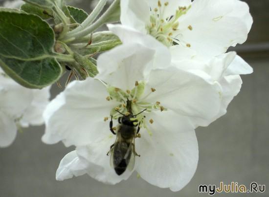 пчёлки-труженицы