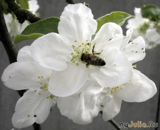 Ещё одна пчела