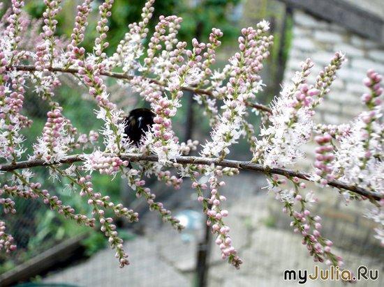шмель на бисерном дереве
