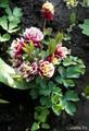 ещё один весенний цветок