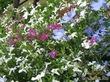 Белые цветы или цвет первой любви