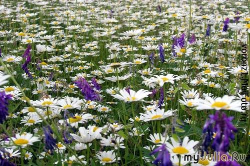 http://www.myjulia.ru/data/cache/2009/05/18/100521_9217thumb500.jpg