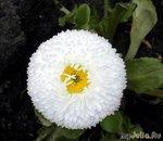 Апрельские цветочки