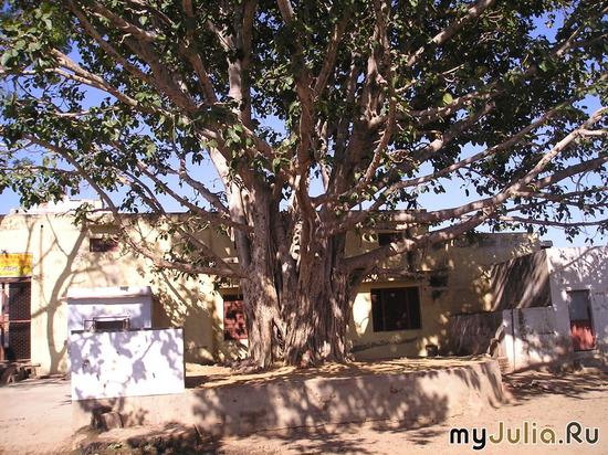 Дерево счастья (Индия, Говардхан)