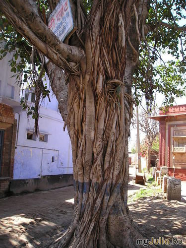 Дерево счастья и желаний