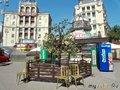 Растущие на дереве стульчики
