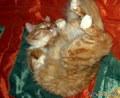 Живоглотик спит