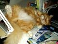 Живоглотик спит...