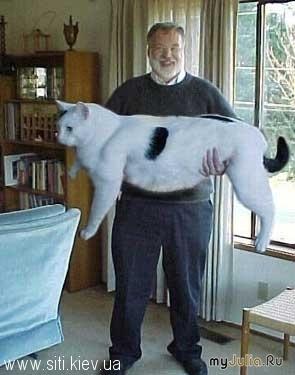 Животные кошки это кошки супер кот