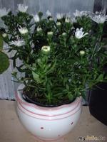 Покупка комнатного растения...