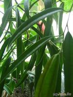 мои домашние джунгли..