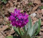 ну... вот кто знал, что в горах цветут Анютины глазки?