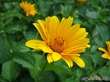 Из жизни одного цветка