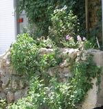 О цветах и домах