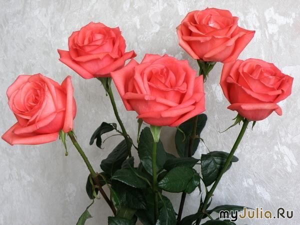 Happy Birthday! - Страница 3 150676_5096-650x650