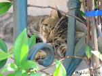 Сон итальянского котейки...